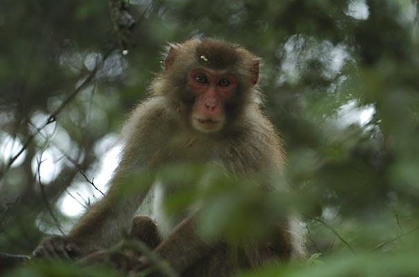 【悲報】サルと誤り撃たれた男性死亡