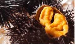 敵「ウニが嫌いなのは本当に美味しいものを食べたことがないから」←これ