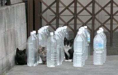 【悲報】住宅街にあるゴミ置き場の角材が燃える、犯人は・・・水入りのペットボトル。「レンズ」になり太陽光で火