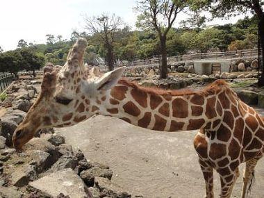 「アニマルリゾート 動物園をつくろう!!」