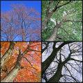 spring-summmer-fall_s