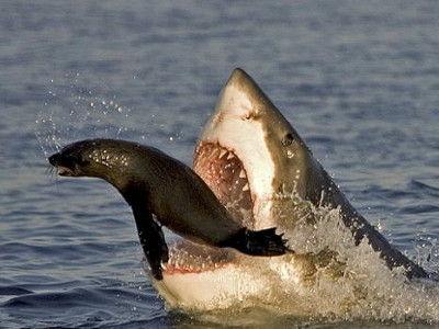 sharkattack00_m