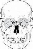 shuman-skull-clip-art_434902