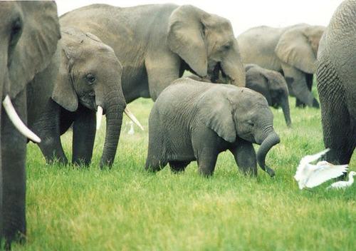 96-06-15_elephant