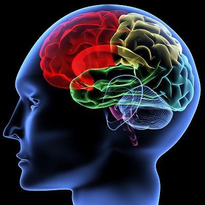 s_Brain1