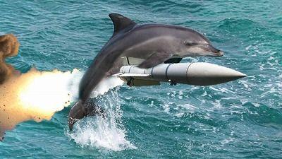 sarmed-dolphin-1-011313