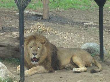 「アニマルリゾート 動物園をつくろう!!」 (3)