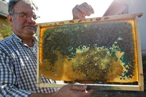 shoney hive