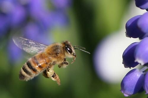 ミツバチ 4