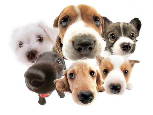 dogs-cute-animal-image-31000
