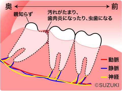 oyashirazu-illust