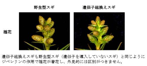 SnapCrab_2013-3-23_15-56-28_No-00