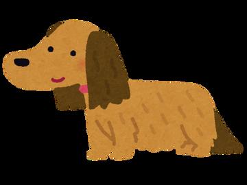 dog_dachshund_choumou