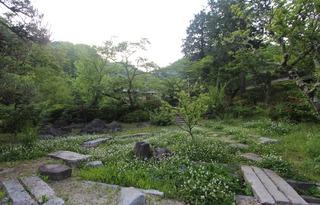 シロツメ草のある庭