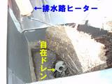 屋根に木が-2