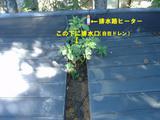 屋根に木が-3