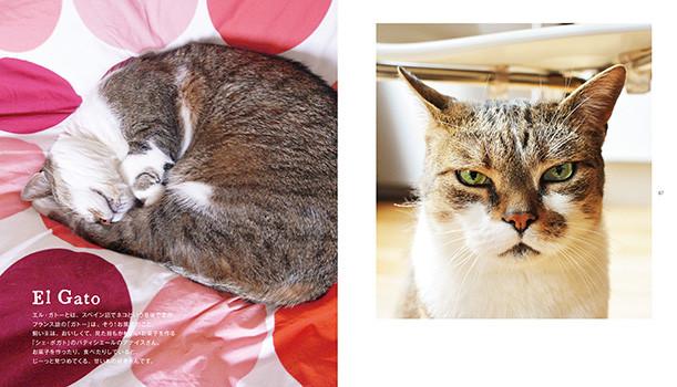 cat06_0110