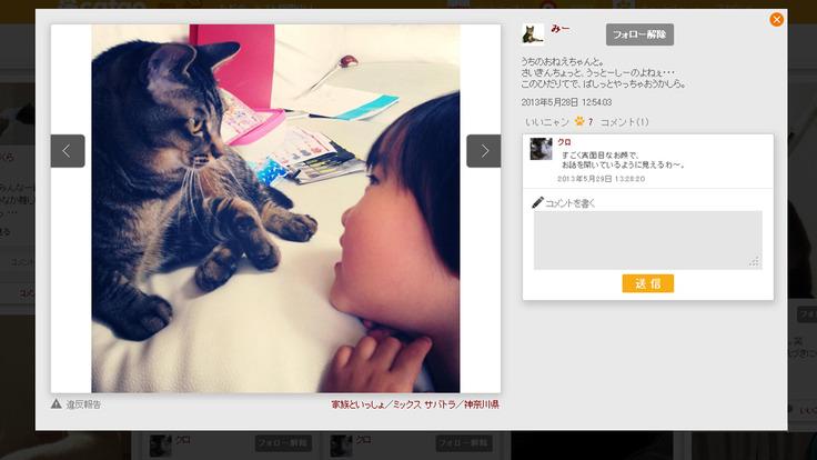 cat02_0604