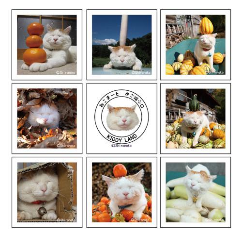 cat09_1105