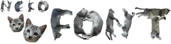 cat08_1105