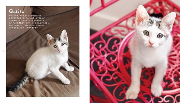 cat03_0110