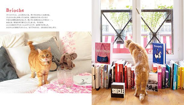 cat02_0110