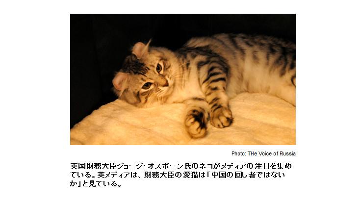 h250511_cat_01