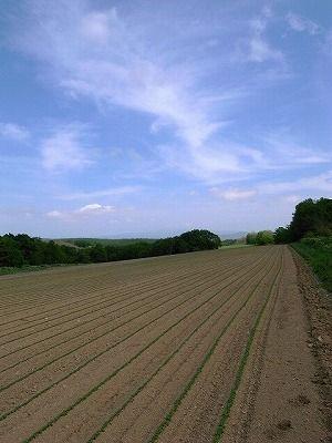 s-藤井さんの畑 (2)