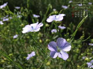 201405月カレンダー