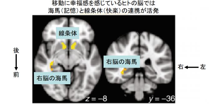 移動を検知する幸福回路が発見される (2)