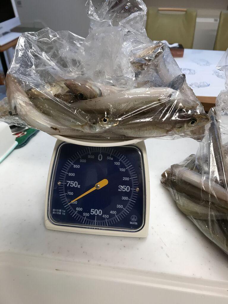 6/29目方1.3kg