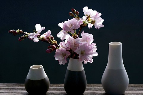 cherry-blossoms-4069596__480