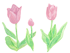 tulip_s