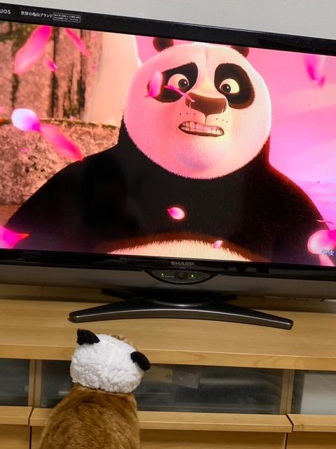 ■必見!パンダがパンダを見ています!■