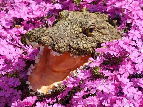crocodile-1611444_640
