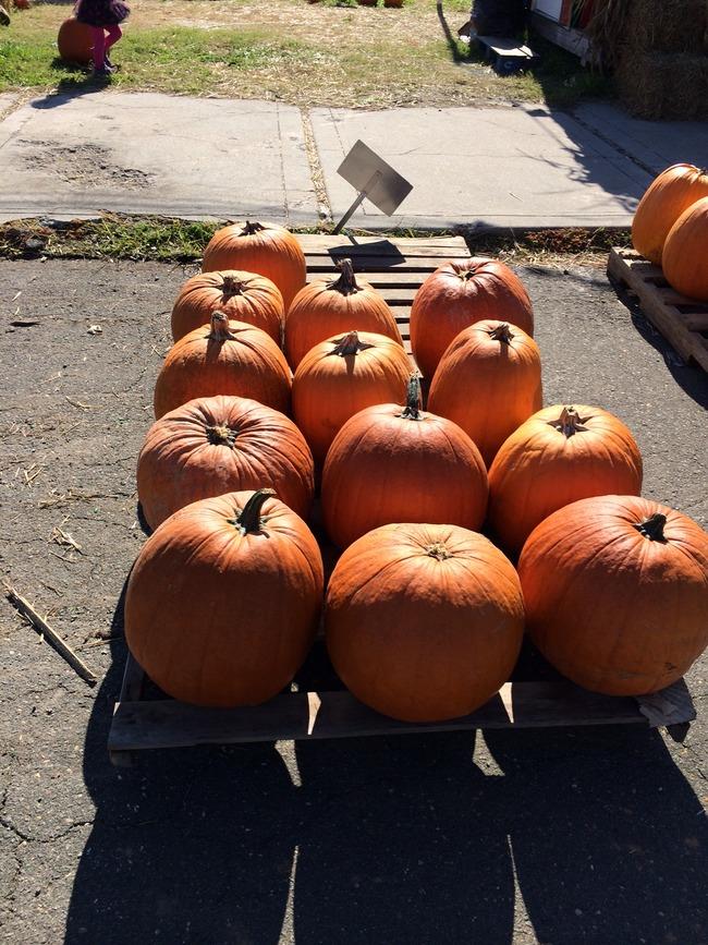 かぼちゃがアメリカで販売されているところ