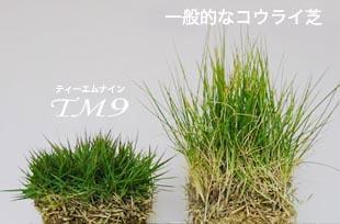 tm9-01