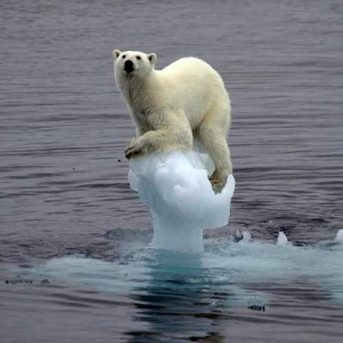 コップの中の水に入ってる氷が溶けても水かさは上がらない←うんうん