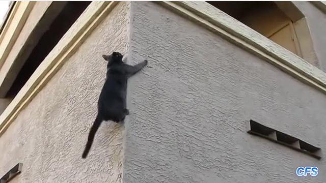 壁を華麗によじ登る!忍者のような猫たちが素晴らしい映像集