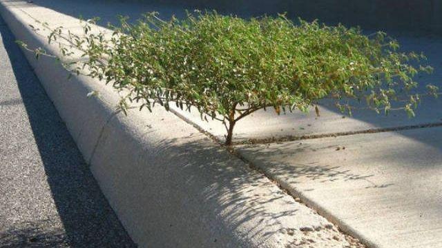 過酷な状況でも生きることを諦めない、生命力に溢れる木々の写真その2 27枚