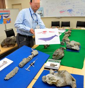 【画像】海のない岐阜県で1700万年前のヒゲクジラっぽい化石が発見されるwwwwwwww