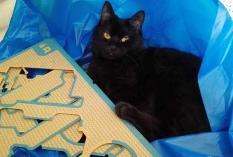 【悲報】ニンテンドーラボ、猫との相性が良すぎる