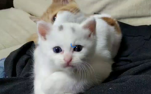 【画像】ネコ、ワイのゲーミングチェアを独り占め😳 + NEW管理人ブラブラ2 「新しい家族が増えました」