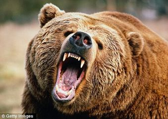 【衝撃】ポケモンGO民 熊と遭遇wwwwwww