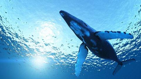 イルカとクジラの超音波_011