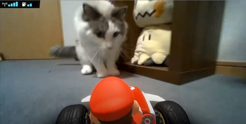 【悲報】有名ポケモン実況者のライバロリ氏、マリオカートで猫を虐待した疑惑で炎上【画像あり】