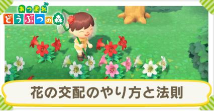 【驚愕】「あつまれどうぶつの森」の花の交配の仕組みは実際の遺伝学に基づいていた!!