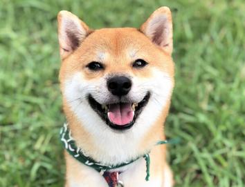 【悲報】明らかにPS2っぽい犬が発見される