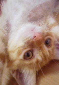 子猫を拾った話をする 画像もつける-067_4