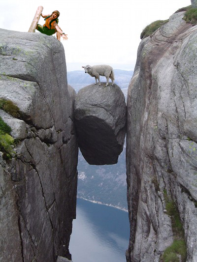 画像加工出来る人、羊さんを助けて-048